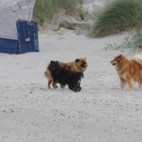 Eyko-Jacomo, Désirée and Einstein run along the beach. Einstein sees for the first time the sea.